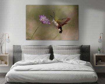 Glasvleugelpijlstaart vlinder, vliegend eten van Erwin Hondebrink