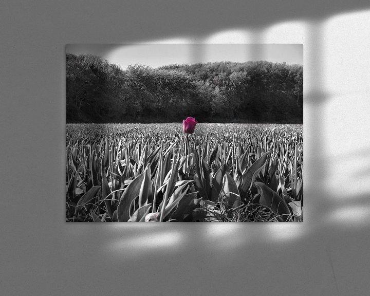 Impression: Tulp in een veld sur Dave van den Heuvel