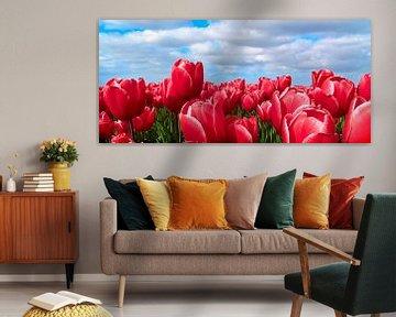 Tulpen von Hans Albers