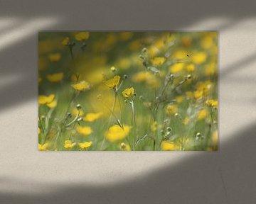 Bloemen veld van boterbloemen von Fotografie Sybrandy