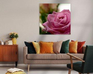 Rose rose van Vivian Fotografie