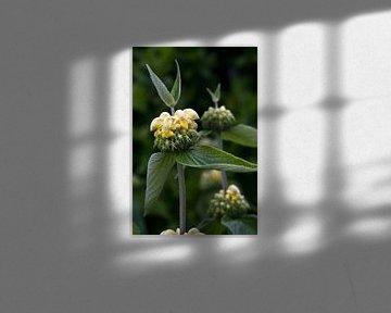 Aparte plant van foto-fantasie foto-fantasie
