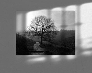 Tree van Nan van Elburg