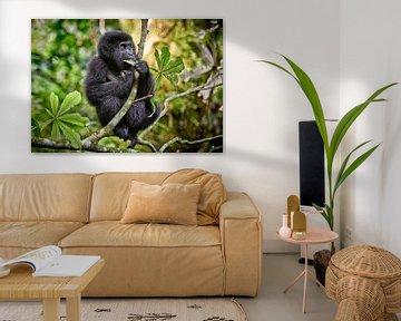 juvenile mountain gorilla sitting on a branch van Jürgen Ritterbach