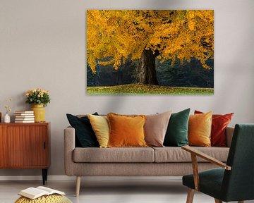 Der orange Baum von Martin Bergsma