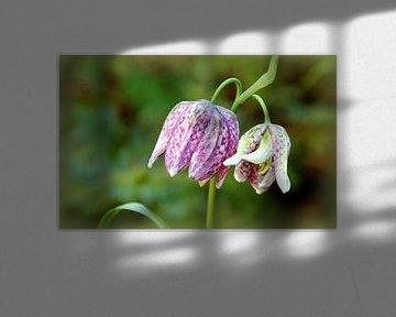 Kievitsbloemen von Marijke van Noort