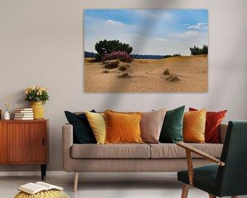 Hoge Veluwe, zandverstuiving  en bloeiende heide bij Schaarsbergen van Cilia Brandts