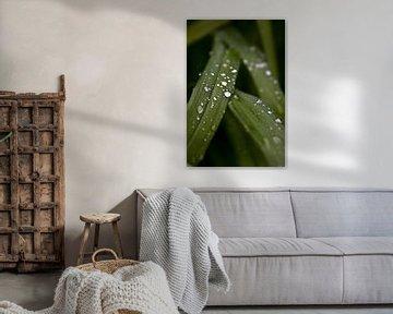 waterplanten onder de regendruppels van foto-fantasie foto-fantasie