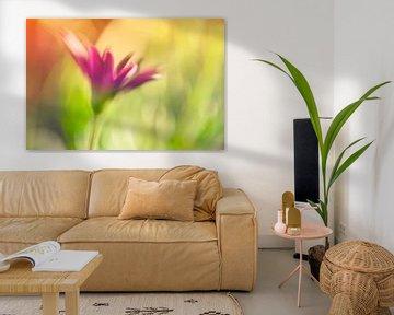 Één bloem von Ellen Driesse