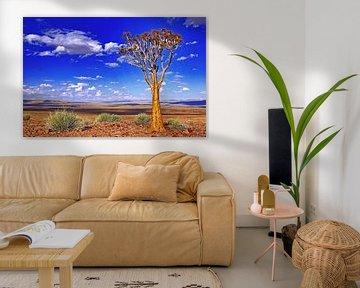 Quiver tree in Namibia van W. Woyke