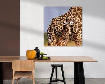 Young Giraffe with mom - Africa wildlife van W. Woyke