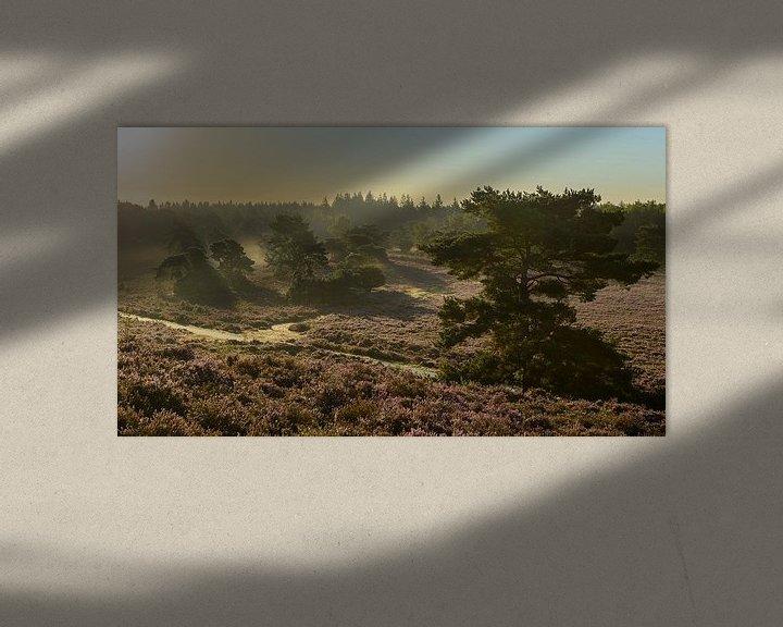 Sfeerimpressie: Zonsopkomst op de Veluwe van Sjoerd van der Wal
