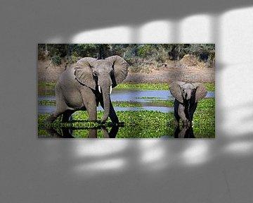 Elefanten im Fluss - Afrika wildlife von W. Woyke