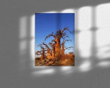 Baobabs at Kubu Island, Botswana van W. Woyke