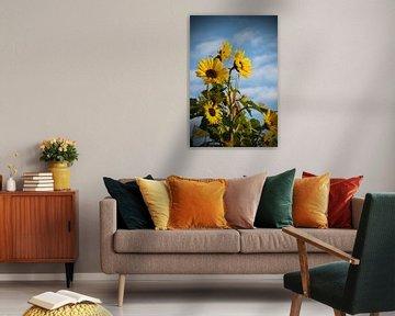 Zonnebloem van Herwin van Rijn
