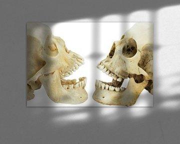 Twee schedels van mensen tegenover elkaar van Ben Schonewille