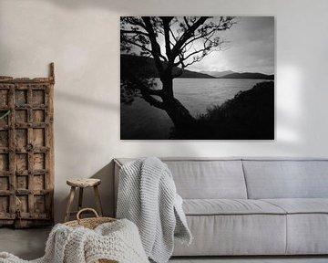Loch Eilde Mor, with a lonely tree, Scotland van Mark van Hattem