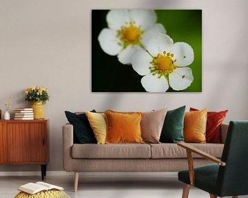 White blossoms von brava64 - Gabi Hampe