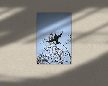 Aalscholver in kale boom, winter van Manuel Declerck