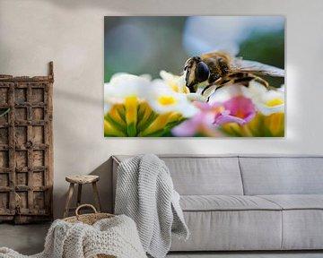 Macro foto bij op bloemen
