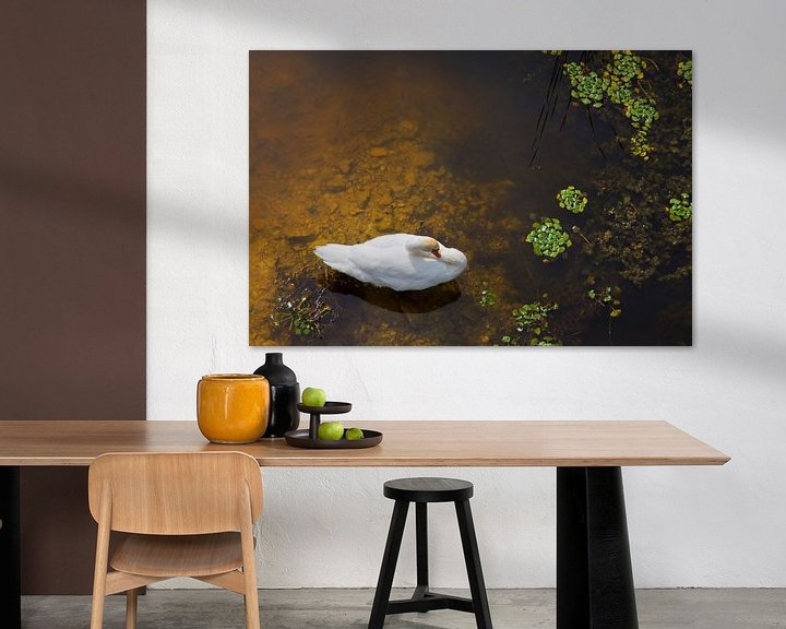 Impression: Swan with sun reflection on water sur Jan Brons