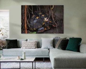 tortoise in a cave  sur claes touber