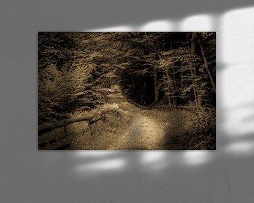 track trough the woods van claes touber