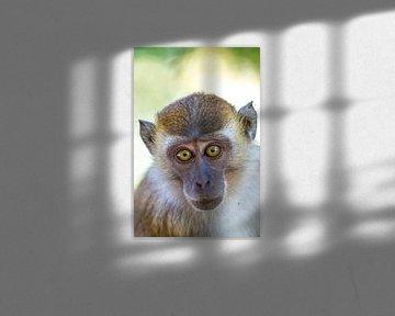 Tierisches Portrait