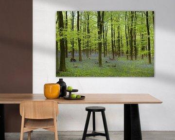 Kleurrijke rust van DuFrank Images