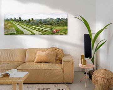Panorama van de Rijstvelden (sawa's) in Bali von Giovanni de Deugd
