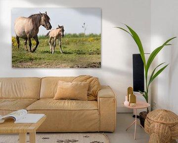 Paarden | Konikpaard merrie en pasgeboren veulen Oostvaardersplassen van Servan Ott