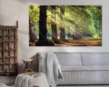 Zonnestralen in het bos von Martijn Kort