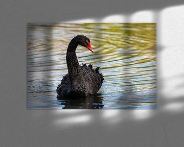 Zwarte veren von Tienke Huisman