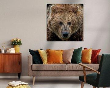 Auge in Auge mit einem Grizzly zu Angesicht von Michael Kuijl