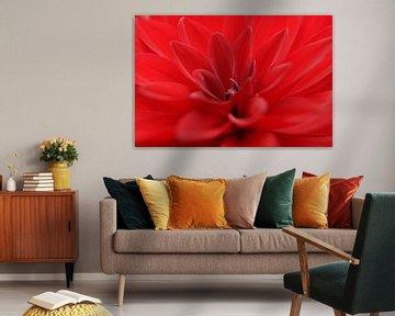 Rode bloem (macro) von Marilyn Bakker
