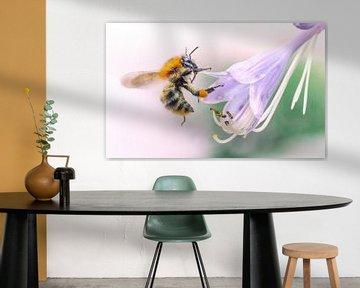 Wesp op zoek naar nectar van Martijn van Dellen