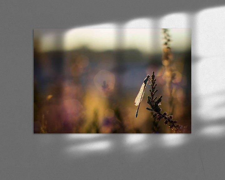 Sfeerimpressie: Een waterjuffer in de ochtendzon  van 3,14 Photography
