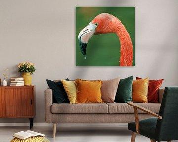 Flamingo van David Dirkx