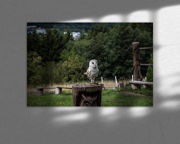 Witte Uil von Jaap Mulder