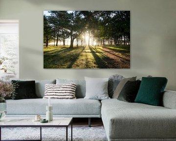 Sun in the woods von Matthijs Dijk