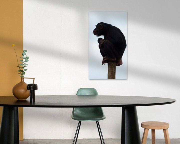 Sfeerimpressie: chimpansee aap van Gonnie van Hove