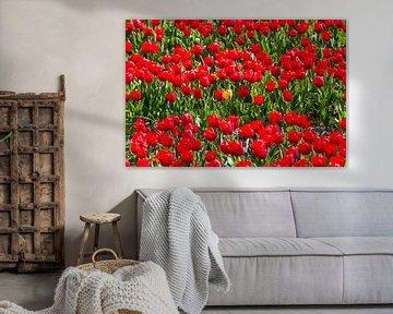 Tulpenveld van Peter Leenen