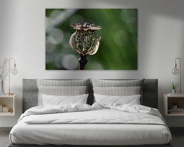 Papaver skelet von Susan Dekker