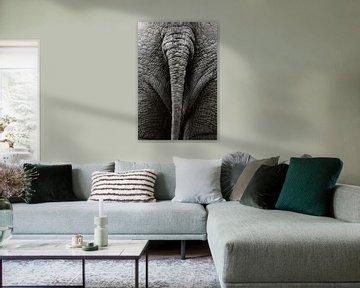 Olifantenstaart (kleur)