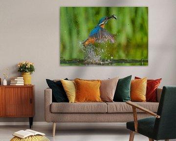 IJsvogel - Hebbus! van IJsvogels.nl - Corné van Oosterhout