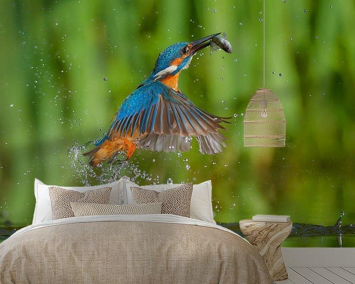 Beispiel fototapete: Eisvogel von IJsvogels.nl - Corné van Oosterhout