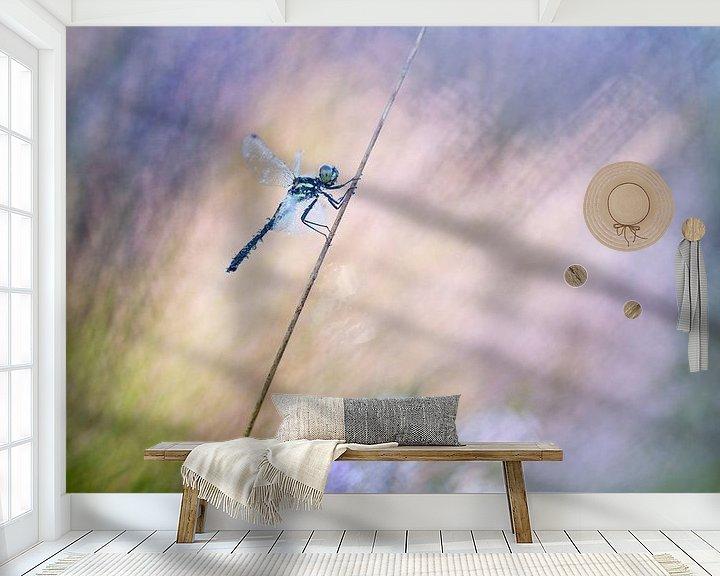 Sfeerimpressie behang: Zwarte heidelibel van Judith Borremans