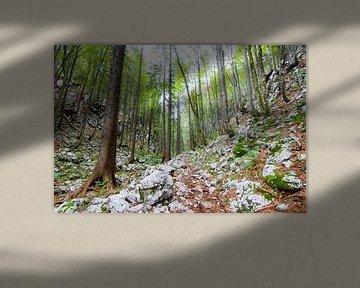 Hoge frisgroene bomen en rotsen van Niels Eric Fotografie