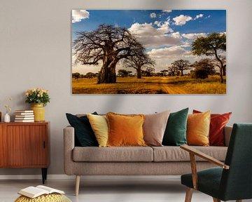 Baobab boom in Tanzania sur René Holtslag