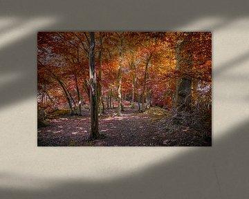 Automne dans la forêt sur Rietje Bulthuis